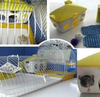 Клетка для домашней крысы своими руками