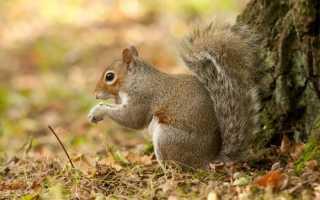 Что едят белки в лесу
