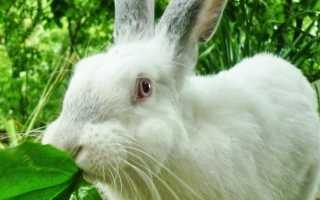 Что нельзя давать кроликам