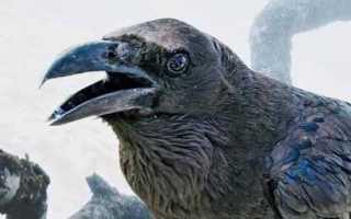 Кто умнее ворон или ворона