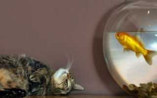 Как спят рыбы в аквариуме фото