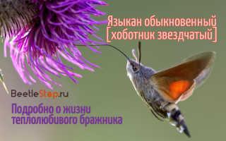 Насекомое летающее как колибри