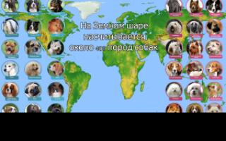 Порода собак ломбардов