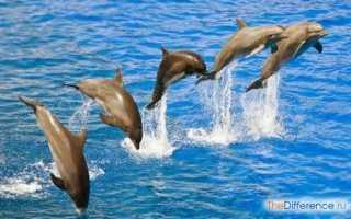 Дельфины едят рыбу
