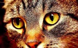 Блошиный дерматит лечение у кошек москва