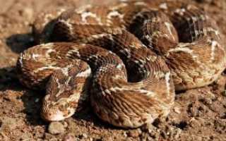 Эфа змея ядовитая или нет