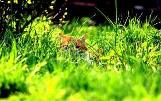 Лечебная трава для кошек