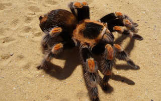 Фото всех пауков