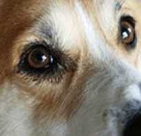 Выделения из глаз у щенка