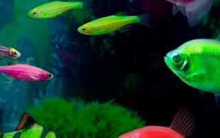 Виды аквариумных рыб картинки
