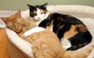 Аллергия у кота симптомы фото лечение