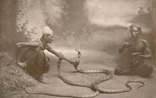 Специалист по змеям