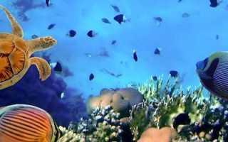 Полосатые аквариумные рыбки