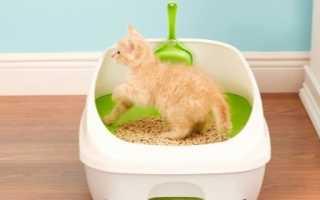 Средство чтобы приучить кота к лотку