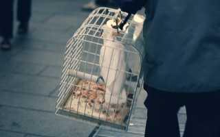 Как перевозить попугая в поезде