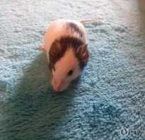Японская мышь фото