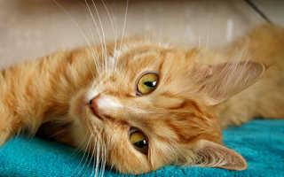 Токсоплазмоз у кошек лечение препараты