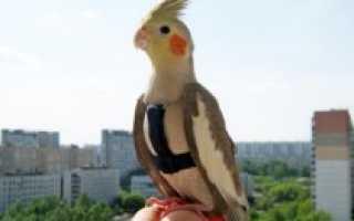 Ошейник для попугая