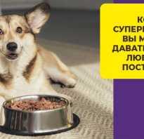 Как рассчитать корм для собаки