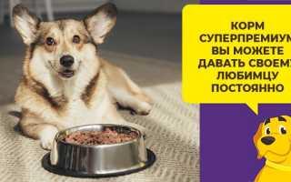 Сколько корма нужно собаке в день