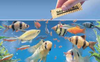 Сколько раз кормить рыб в аквариуме