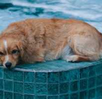 Можно ли мыть собаку каждый день