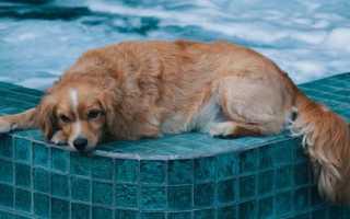 Как часто можно мыть щенка шампунем