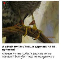 Опутенки для совы купить