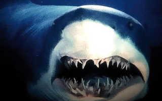 Акула к какому виду относится