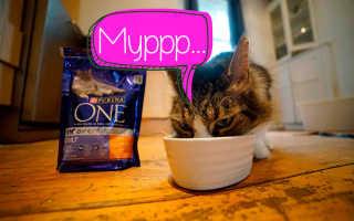 Влажный корм пурина ван для кошек