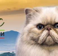 Кошки с желтыми глазами фото
