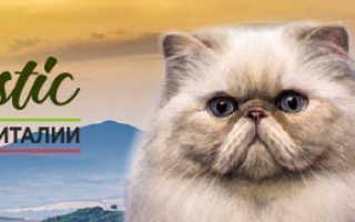 Кот с красными глазами фото