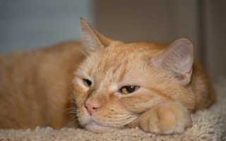 Котенок рыжие кошки