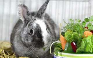 Чем кормить кроликов дома