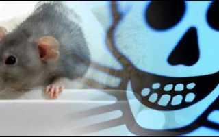 Сколько крыса может без воды