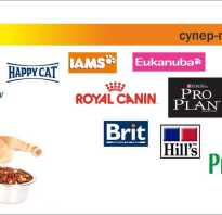 Чем можно кормить шотландских котов