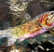 Виды рыб семейства лососевых