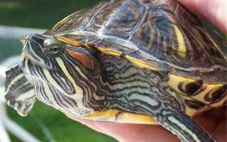 Где спят черепахи