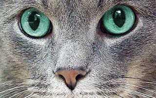 У кошки котенка слезятся глаза