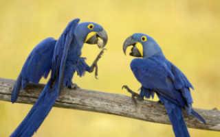 Самый говорливый попугай
