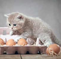 Можно ли кормить котов яйцами