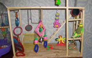 Игрушки для попугая видео