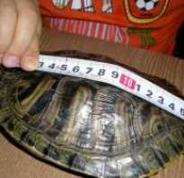 Как узнать сколько лет черепахе