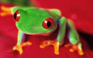 Взрослая особь лягушки