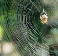 Кто плетет паутину паук или паучиха
