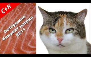 Почему котов нельзя кормить рыбой