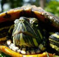 У черепахи пятна на панцире
