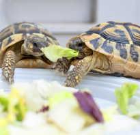 Как правильно ухаживать за черепахами