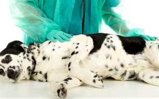 Панкреатит у собак мелких пород лечение